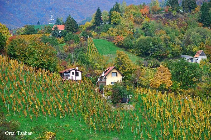 שדות בתים1.jpg