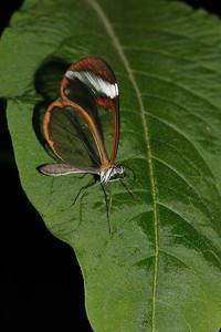Vlindertuin Kwadendamme 2004