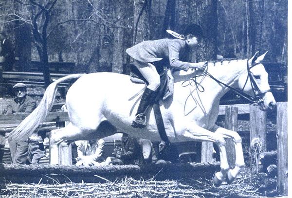 horse aiken woods show.JPG