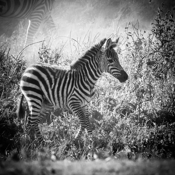 Tanzania_Feb_2018-339.jpg