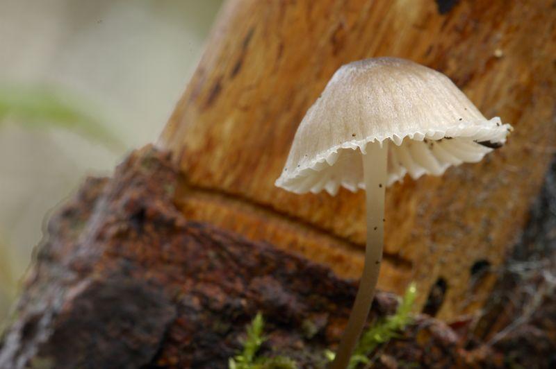 mushroombiege.jpg
