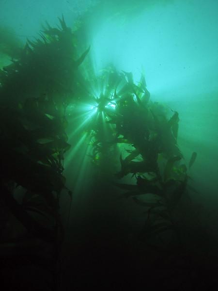 Kelp light 1.jpg