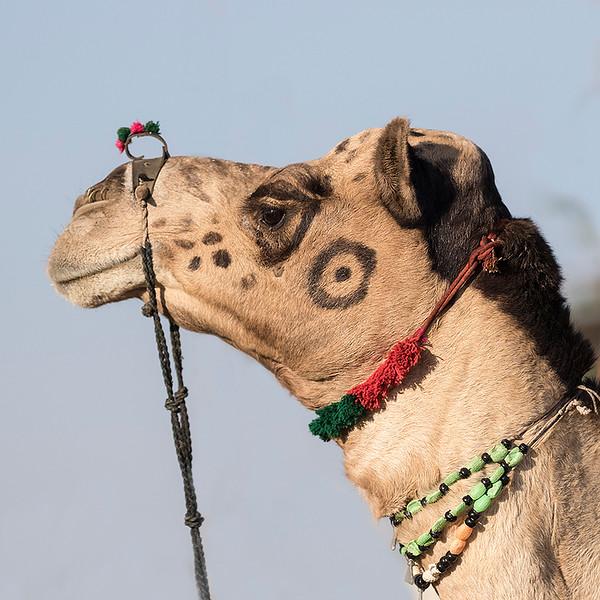 000_Rajasthani_Camel_Head_W2A2003_1.jpg