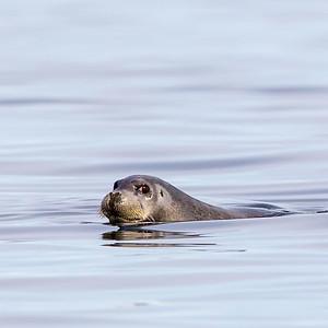 Hair Seals