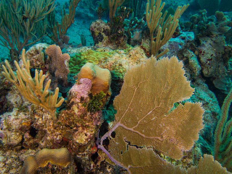 Tulum Trip - Diving 20130405-17-49 _405263404.jpg
