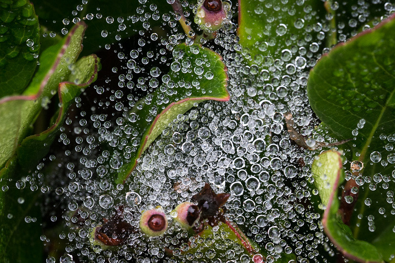 July 22 - Spider web after a rain.jpg