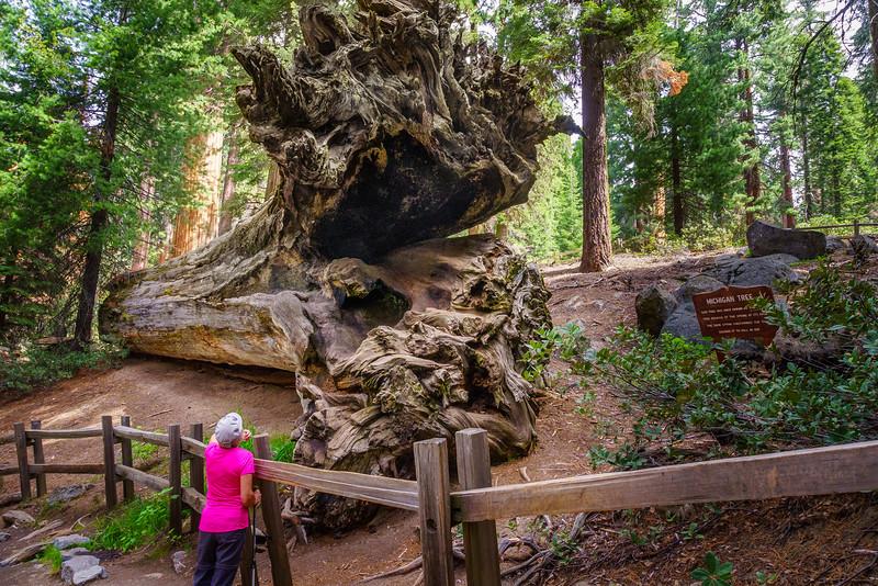 Sequoia -090616-033.jpg