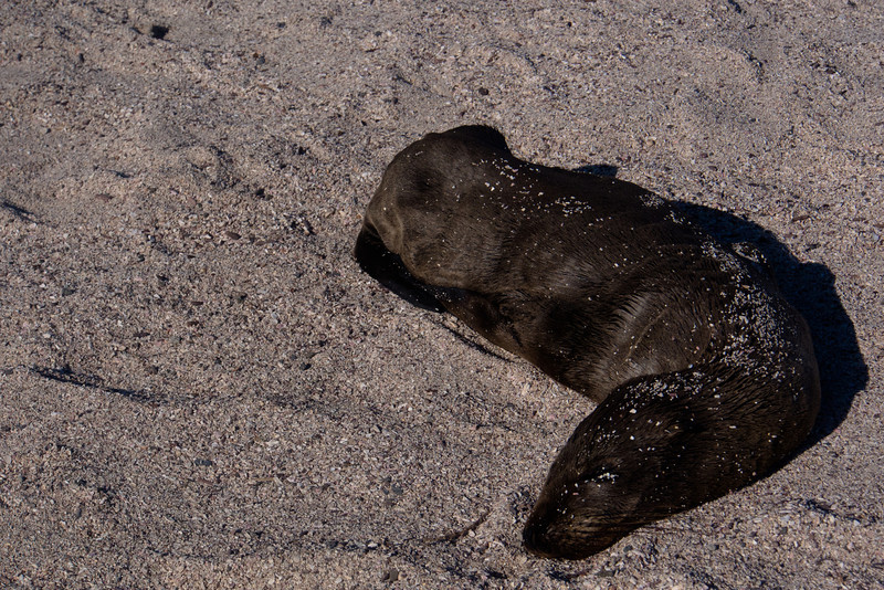 dying sea lion.jpg