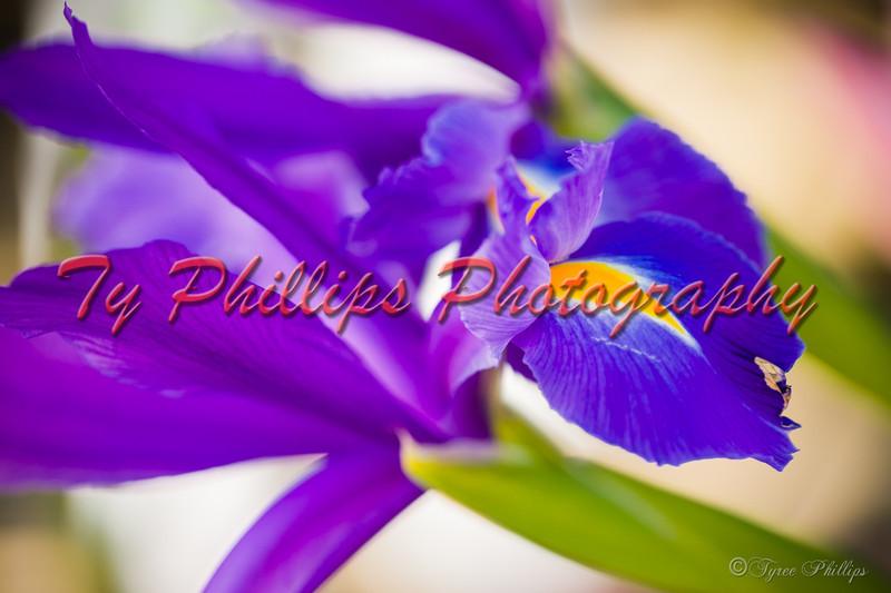 Laurens Flower Workshop