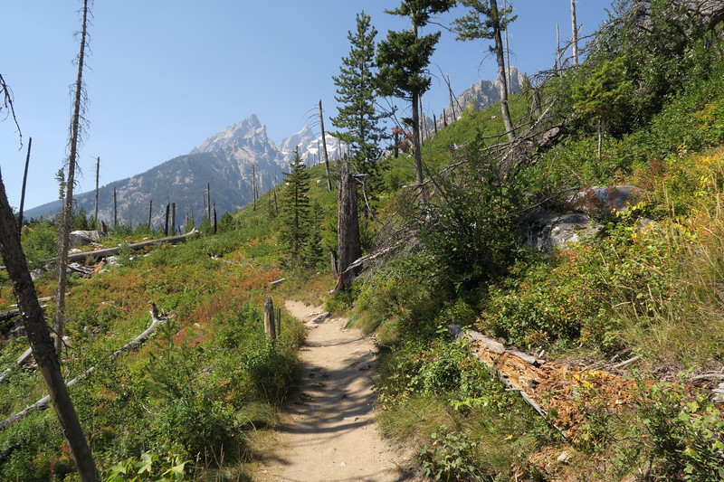 Teewinot - Along the Jenny Lake Trail