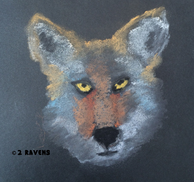 coyote in pastel