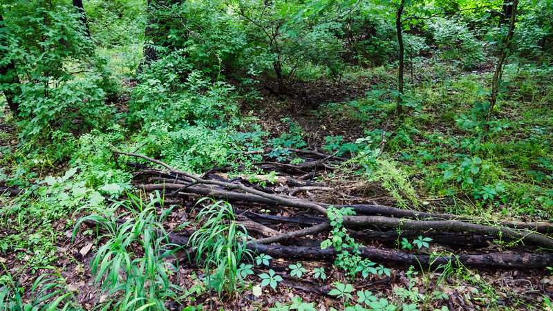 This log pile berm is collecting mud and leaves on the upside.  need to cover the logs a bit more and cook in place.
