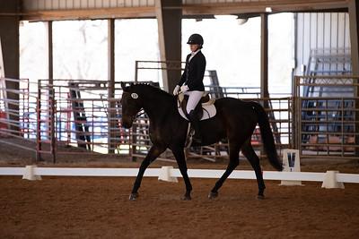 Horse 119