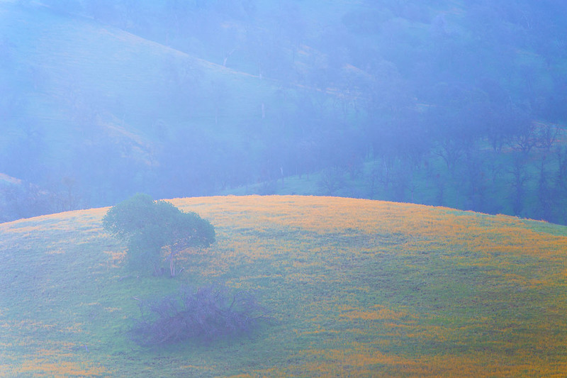 Bear_Mountain_Wildflowers_Southern_California_MG_1980.jpg