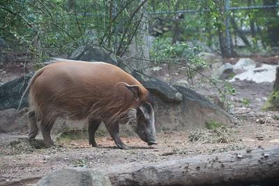 Connie-NC zoo