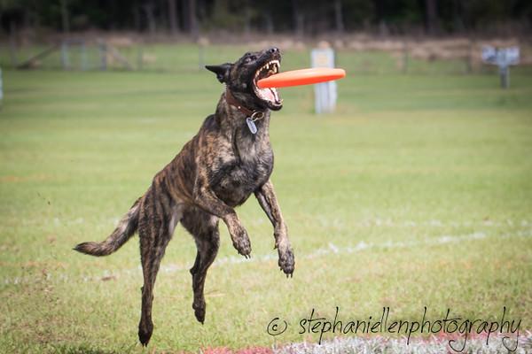 _MG_2676Up_dog_International_2016_StephaniellenPhotography.jpg
