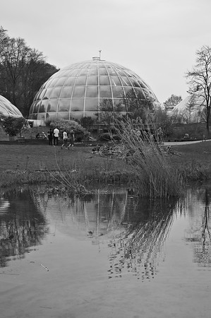 Botanical Garden Zürich - April 2019