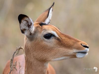 Kenya's Animals