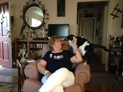 Cats:  Dewey & Chester