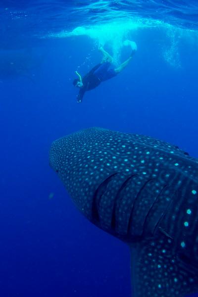 2014 Whale Shark - Cave Adventure-28.jpg