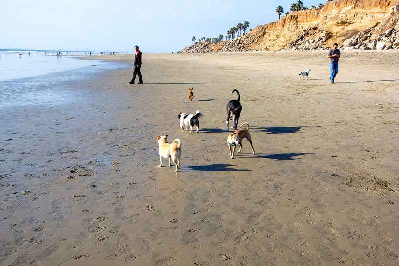 dogs_beach-6.jpg