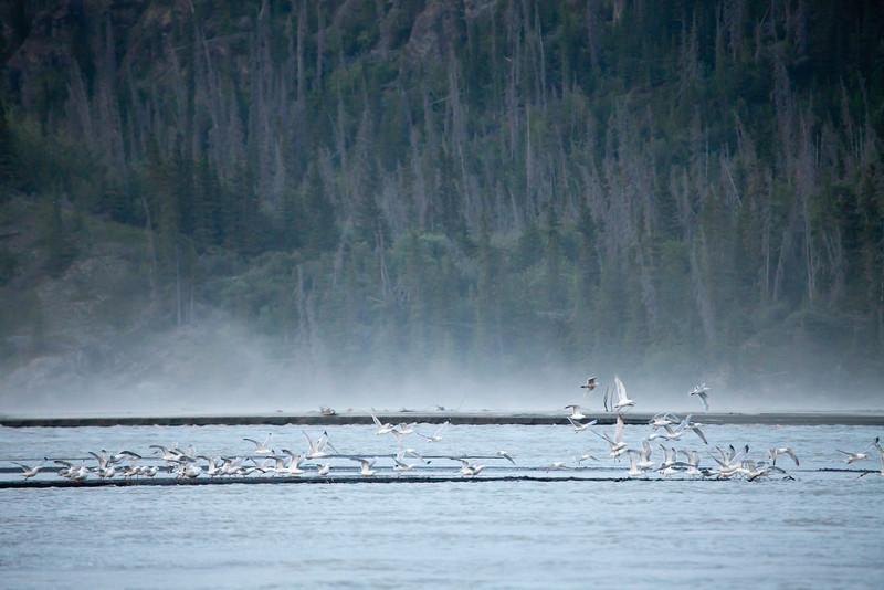 Alaska Copper River-8339.jpg