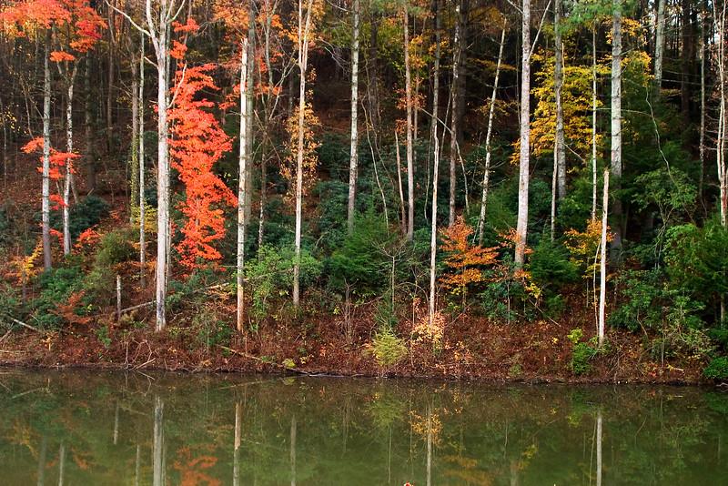 lake fall colors_6302.jpg