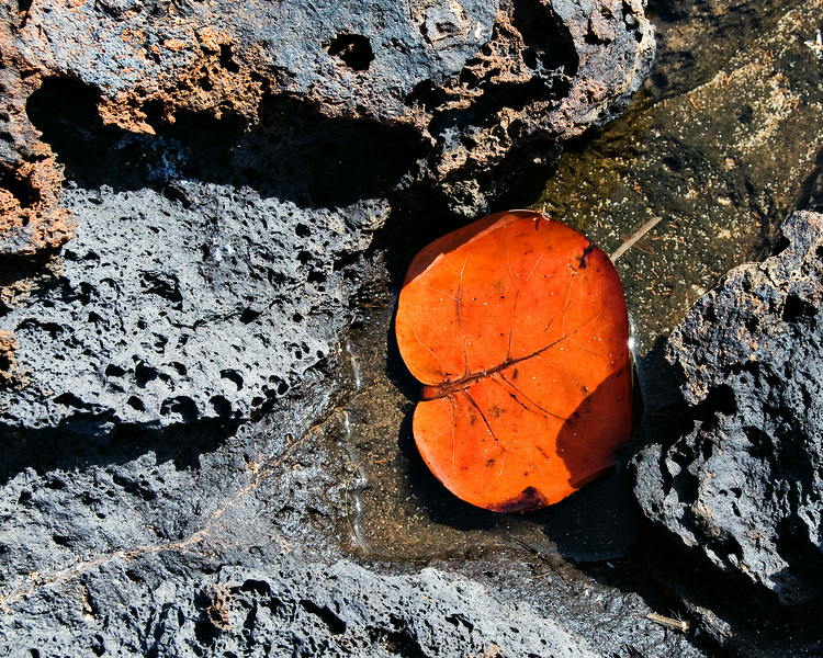 Lava and Leaf
