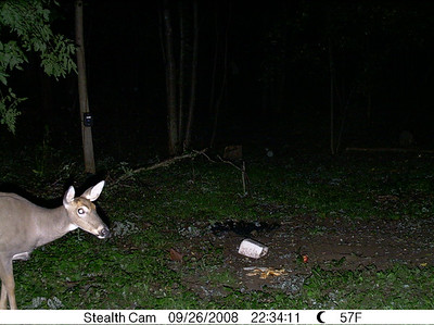 Wildlife caught on trail cameras