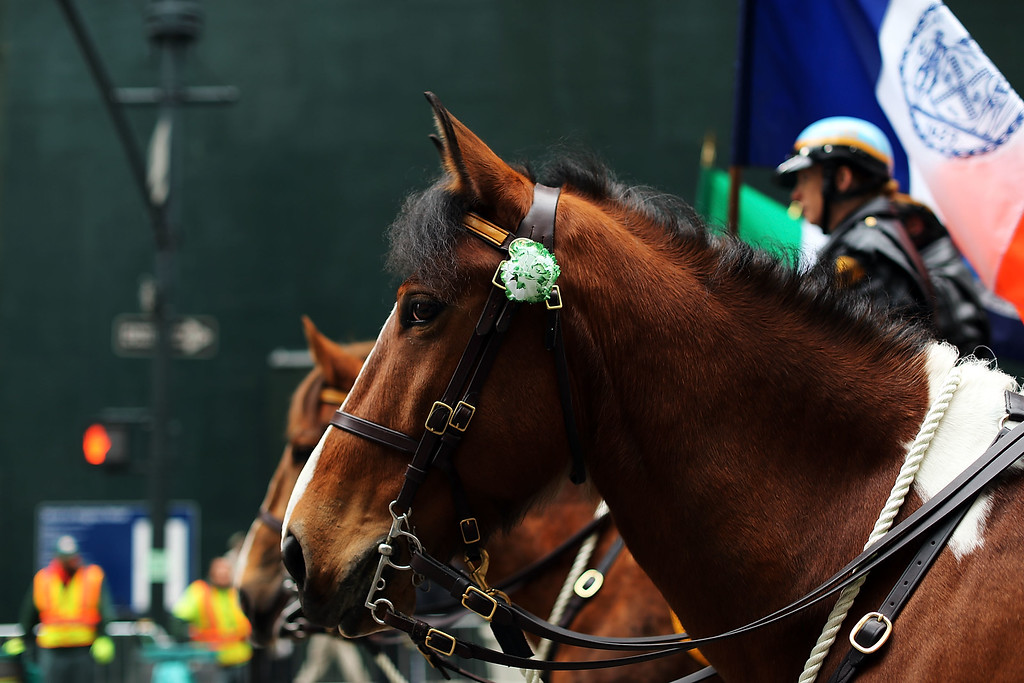 . A police horse is viewed riding up 5th Avenue during New York City\'s St. Patrick\'s Day Parade on March 17, 2015 in New York City. Despite a policy shift that will allow a gay group to march for the first time in the parade\'s history, New York Mayor Bill de Blasio has refused to march in the city\'s parade. Tuesday\'s parade saw the first openly gay group, OUT@NBCUniversal, marching under its own banner.  (Photo by Spencer Platt/Getty Images)