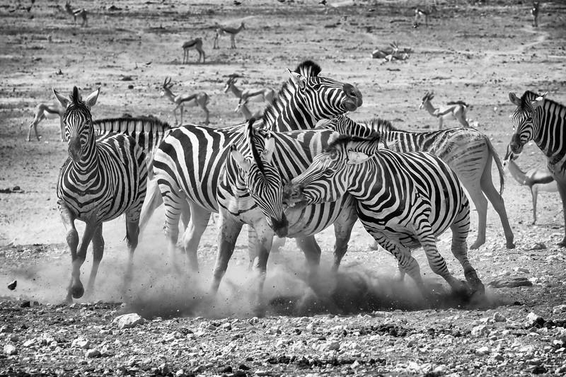 Namibia 69A9206.jpg