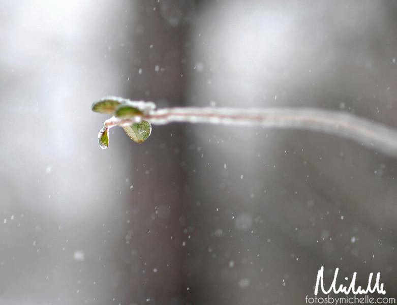Snow1-29-10-004.jpg