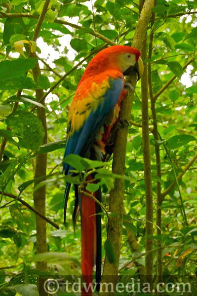 Costa Rica Tourism Board.jpg