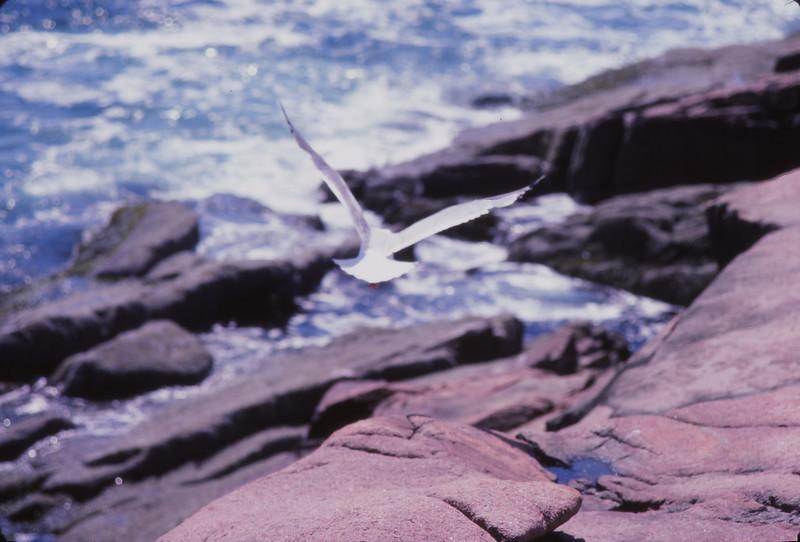 Nova Scotia 1983 - 110.jpg