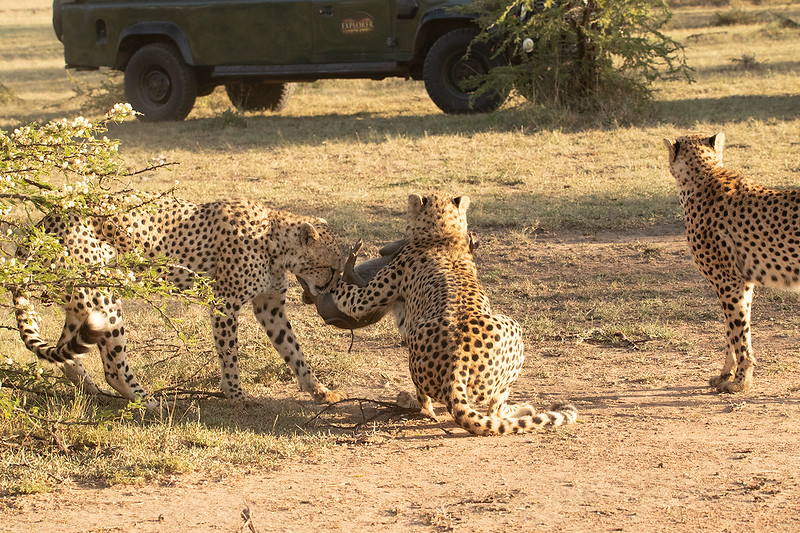 warthog-tug-of-war.jpg