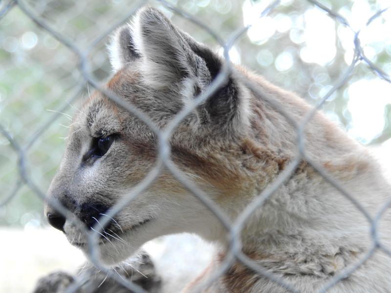 Cheyenne Mtn Zoo 2019 (1208).JPG