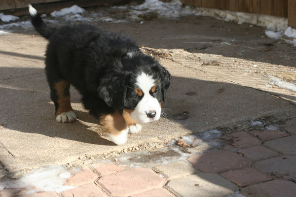 Charlotte's Pups 6.5 wks old 1/8/07