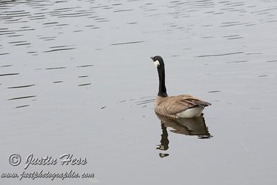 Sprague Lake Walk 5-18-2013