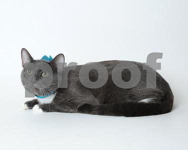 2017 July Cat