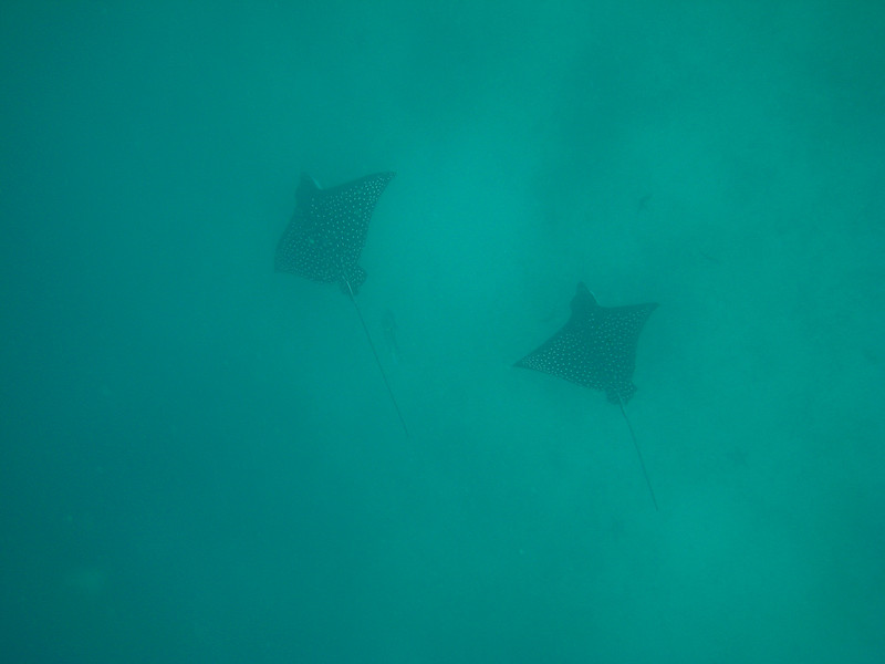Diving in the Galapagos (270 of 392)