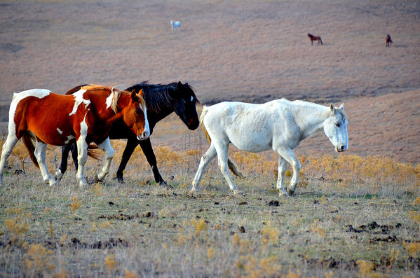 121119  Kansas Flint Hills -Teter Rock and the Wild Mustangs