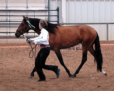 Rocky Mountain Iberian Horse Club Show