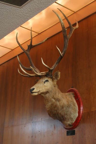 9350 Elk.jpg