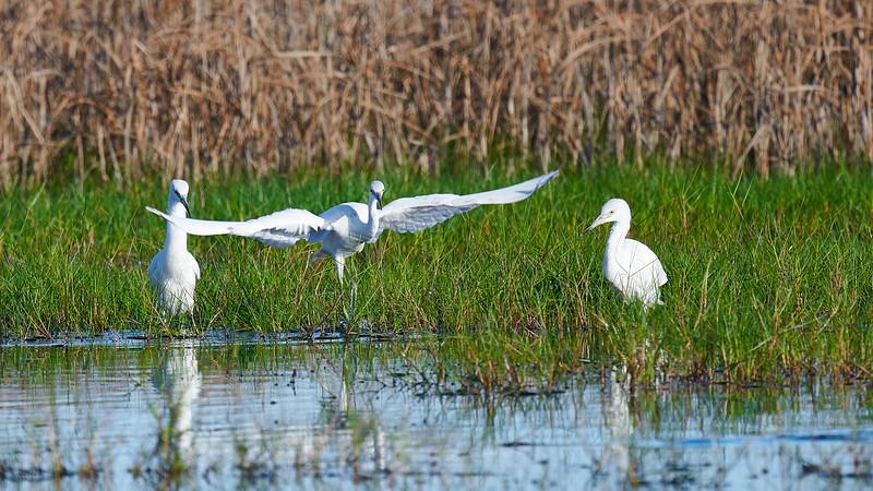 20181103 - Brazoria Wildlife Refuge-85B_3876.jpg