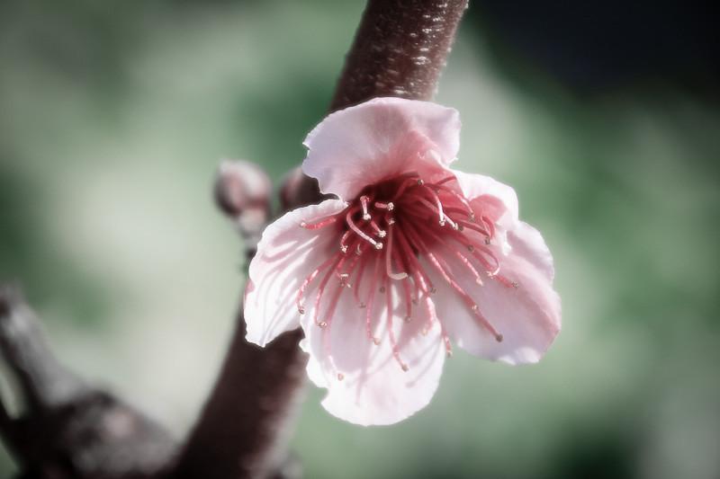 apr 7 - Flower.jpg