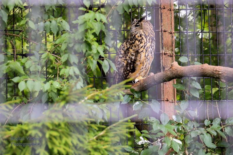 2016-07-17 Fort Wayne Zoo 715LR.jpg