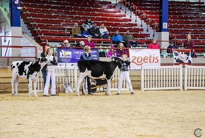 New York Spring Junior Holstein 2018
