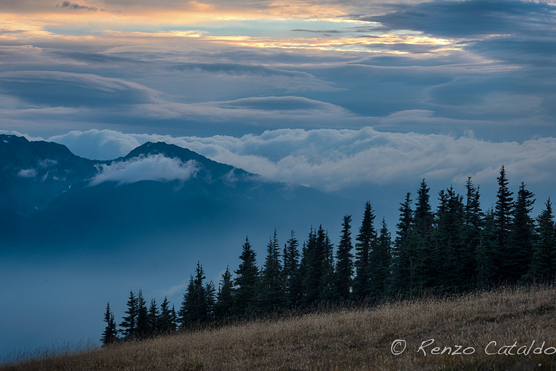 Hurricane Ridge1.jpg