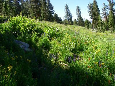 Mount Dana 20100812