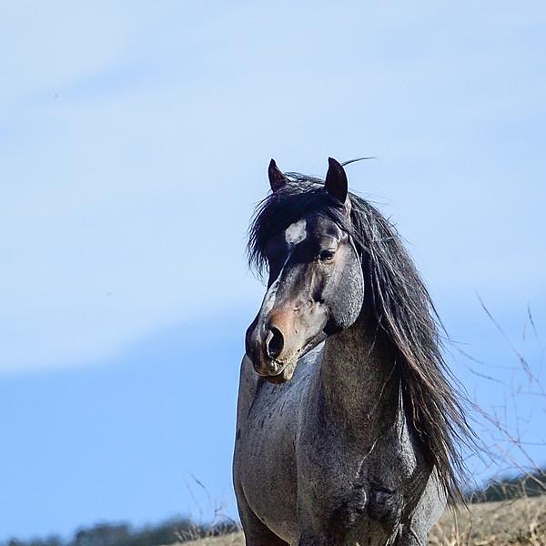 Mustang - Barack